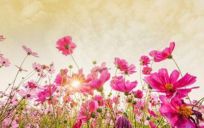 Der Frühling erwacht und die Natur wandelt ─ auch Sie!